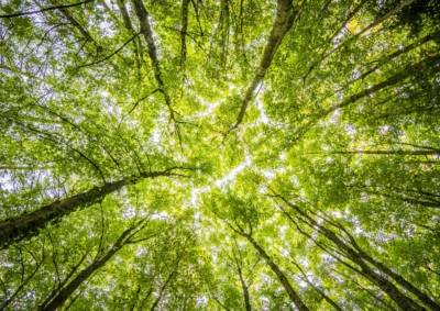 Groen tast je hersenen aan