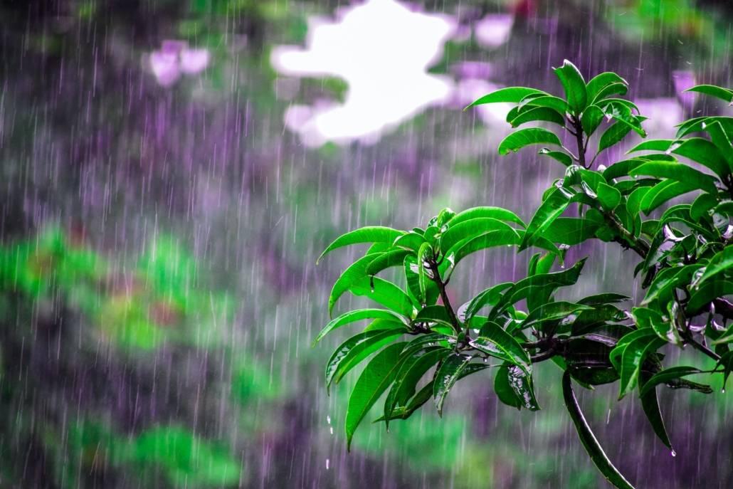 wandelcoaching en regen